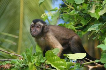 Monkey close up on the tree