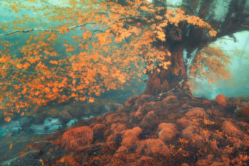 Wall Mural - fantasy forest in autumn with a stream
