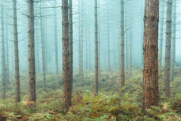 bare trees forest with fog