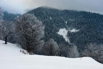 winter dawn in countryside