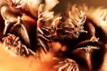 Beechnuts. Abstract macro view.