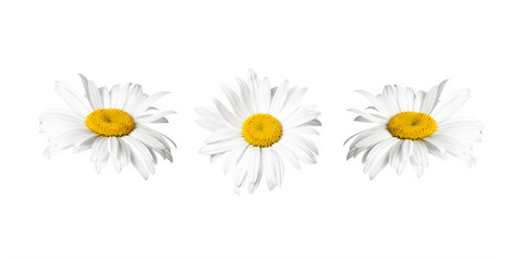 White chamomile flowers collage, floral design wallpaper