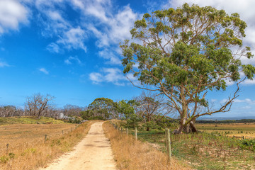 Manna Gum Drive, Cape Otway, Australia