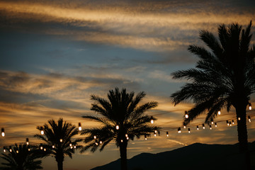 Yellow lights hang between the green palms on the sunset