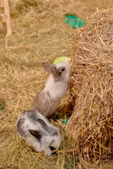 Small rabbits
