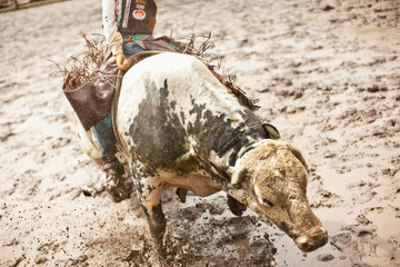 Cowboy riding bull in rodeo.