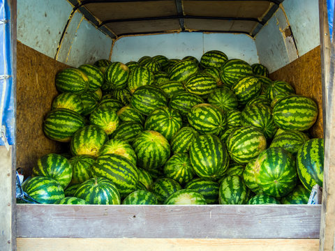 Watermelon new crop lie in the back of the van