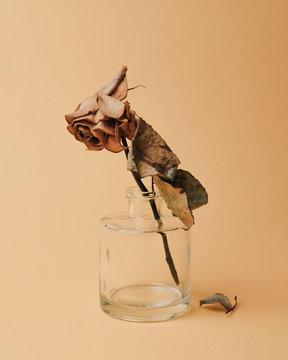 Dead rose in small bottle