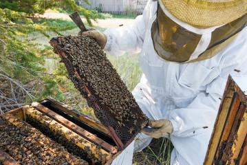 Beekeeper Looking at a Bee Frame