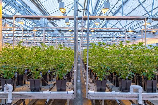 Marijuana Farm in Oregon