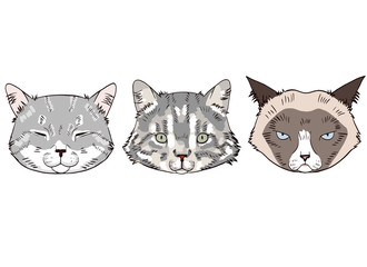Colorful sketches of cat heads. Cats portraits on white background.