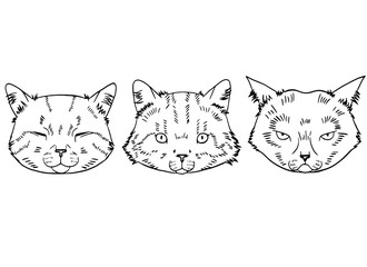 Sketches of cat heads in realistic style. Cats set, vector illustration, hand-drawn cute fluffy cats.
