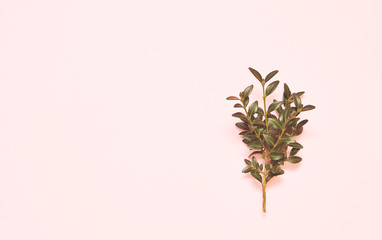 Green branches on pink background.