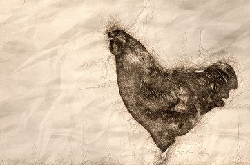 Wall Mural - Sketch of a Proud Red Rooster Standing Tall in the Green Grass