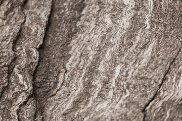 Abstract Stone Texture