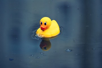 Rubber Ducky floating in pond, with reflection