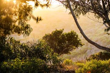 A green landscape during golden hour
