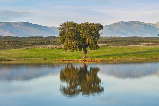landscapes with oaks, lake and mountains