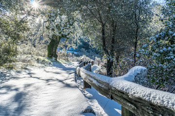 Hiking trail after an unusual snow storm on the hills around the Bay Area, Skyline Ridge Open Space Preserve, California