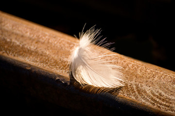 feather on a railway track