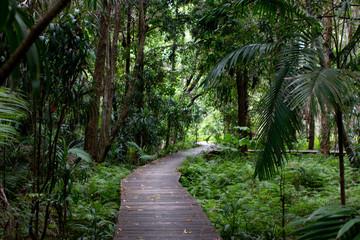 wooden path in the rain forest jungle adventure bush walk