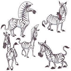 bundle pack zebra cartoon