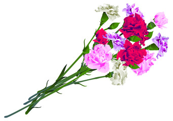 Red, white and pink carnation flowers bouquet isolated on white background. Vector illustration