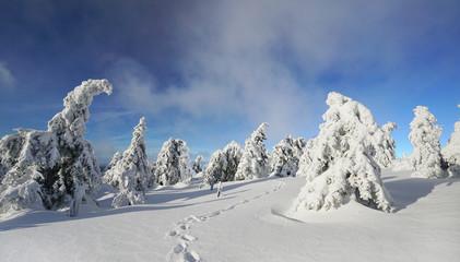 Wintermärchen - Schnee soweit das Auge reicht