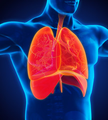 Human Respiratory System Illustration