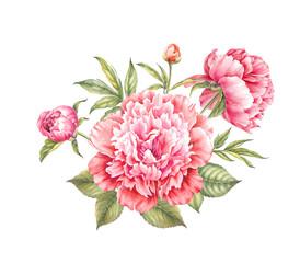 Red peony flower. Watercolor illustration. Botanical design.