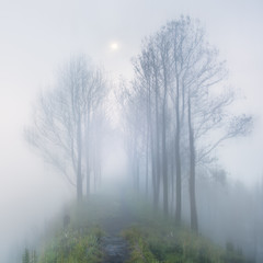 Foggy mystery moonlight in long way with trees