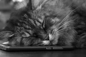sleepy cat sleeps on a red phone