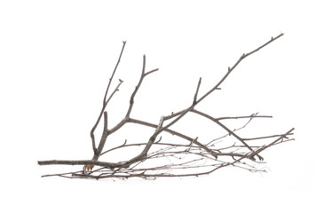 Dry branch, twig isolated on white background Fototapete