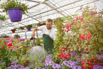 freudiger Gärtner gießt bunte Blumen im Gewächshaus einer Gärtnerei // joyful gardener pours colorful flowers in the greenhouse of a nursery
