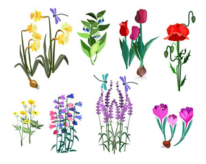 Set of spring flowers. Tulip, roses, wild flowers, papaver, bellflower. Can be used for topics like flora, blossom, plants