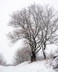 Snow on a tree in winter