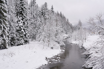 Fototapete - Partially frozen river running through a snowy forest in winter