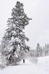 Fototapete - Friends out hiking by snow covered trees in winter