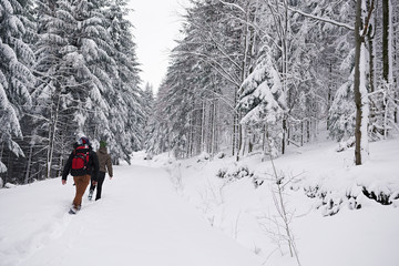 Fototapete - Couple hiking along a snow covered forest trail in winter