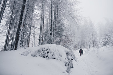 Fototapete - Friends hiking together through a snow covered forest
