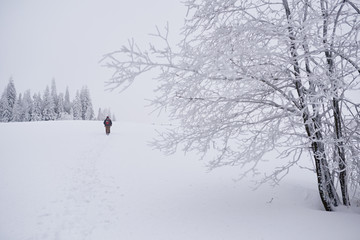 Fototapete - Couple hiking through a snowy field  in the wintertime