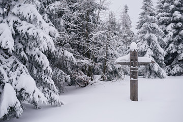 Fototapete - Wooden totem in a forest covered in snow