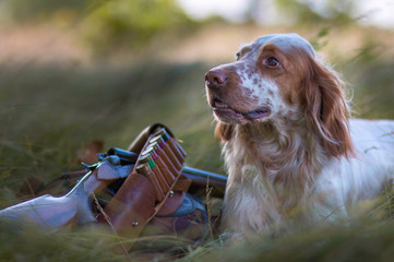 Autocollant pour porte Chasse Hunting dog. Pointing dog. English setter. Hunting. Portrait of a hunting dog with trophies. On hemp the gun, cartridges and trophies lie. Real hunt