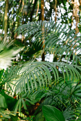 leaves of exotic tropical plants