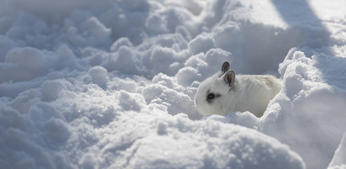 little cute white bunny in the snow
