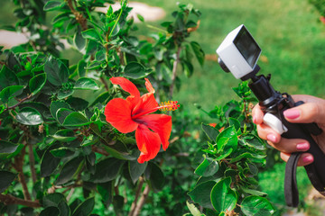 Closeup view of female hand holding white action camera in hand and making photo or video of beautiful red flower outside during summer vacation. Horizontal color photography.