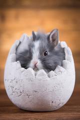Easter rabbit in egg shells