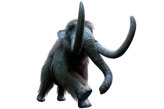 mammoth on white background render 3d