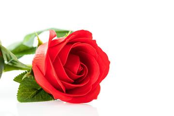 Single Red plastic fake roses on white
