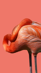 Fototapeten Flamingo flamingo separated on the color of the year 2019 background - living coral